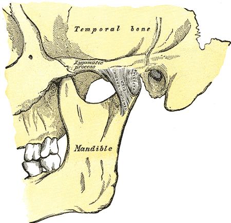 מפרק הלסת – TMJ