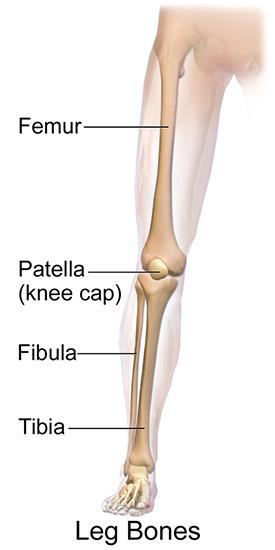 כאבים ברגליים - מבנה הגפה התחתונה