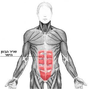 היפרדות בטנית - השריר הישר בטני